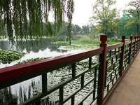 Bridge at Yuanmingyuan (圆明园,) Beijing (北京,) China