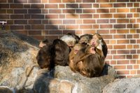 Monkey pack at the Berlin Zoo, Germany
