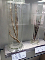 Medicine Museum some gross marine life